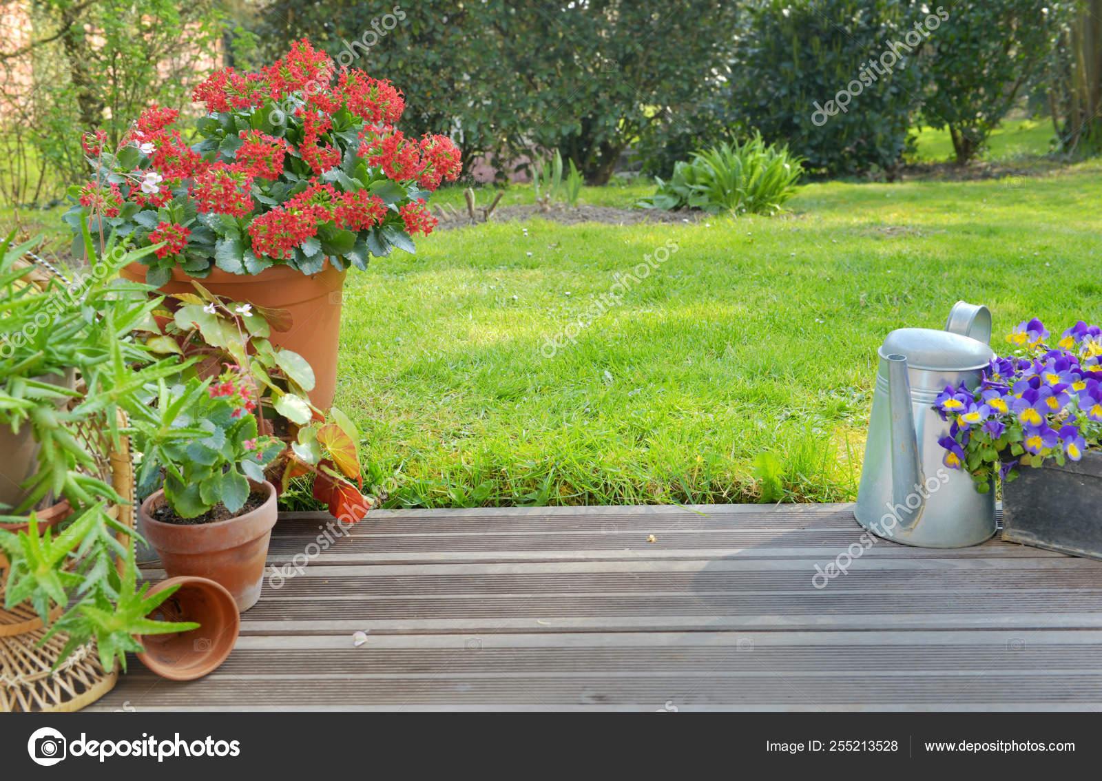 Suculenta En Maceta En Flor En Un Jardín En Una Terraza De