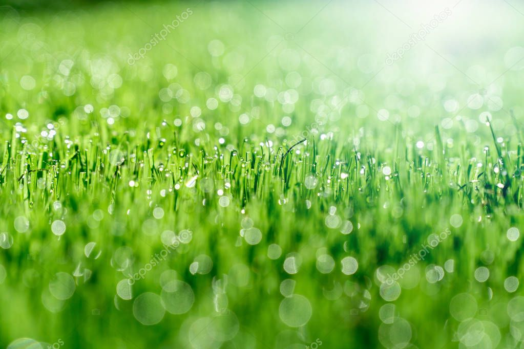 Close up of grass in a garden with sunlight