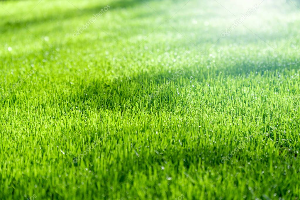 Green grass with sunlight, background