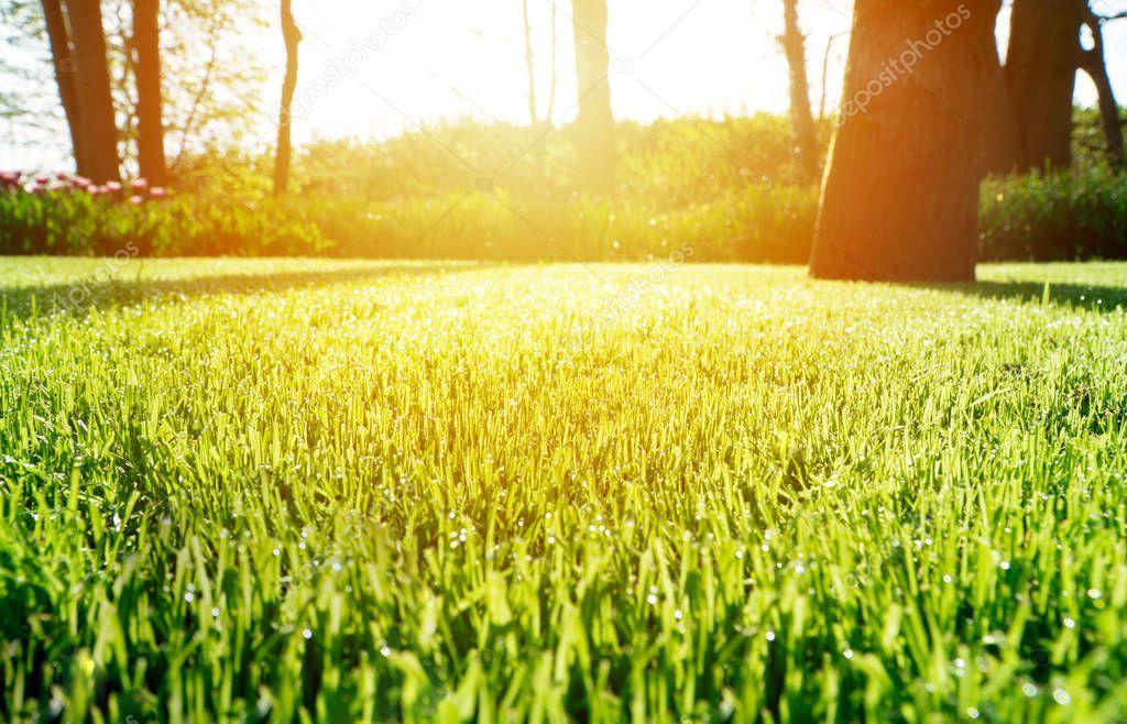 Sunlight on a beautiful garden
