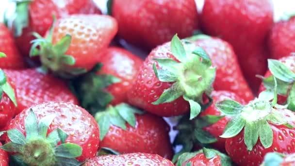 krásná úroda zralé čerstvé sladké jahody od zahradní parcely