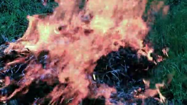 hustý kouř a horké jazyky plamenů ohně stepní lesní požár