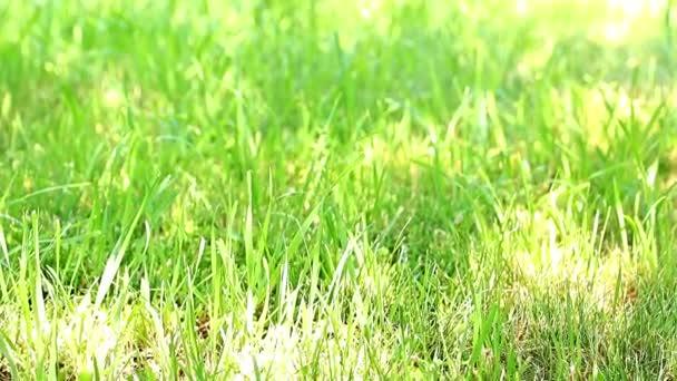 den slunce svítí jasně zelené trávy