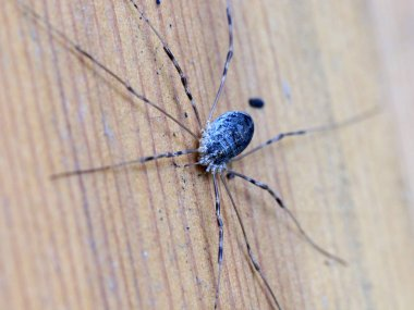 large forest spider on a wooden surface