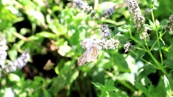 krásný motýlek na větvích rostlin máty peprné