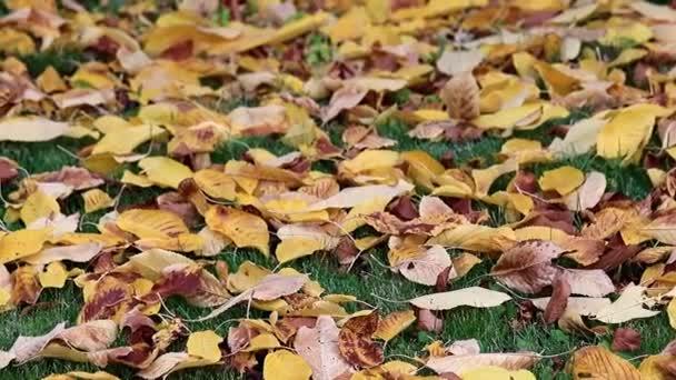 Trockene Herbstblätter von Bäumen liegen auf dem grünen Rasen