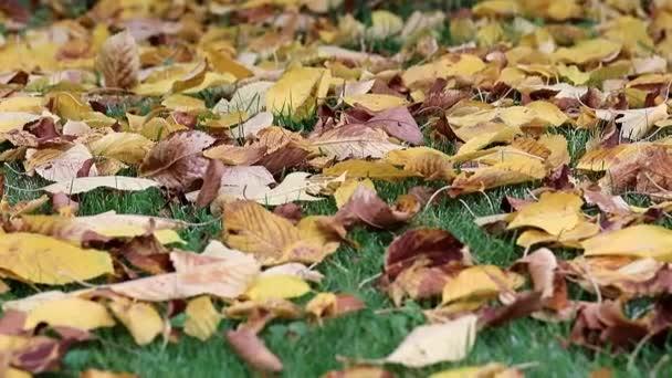 jsou suché podzimní listí stromů leží na zelené trávě trávníku