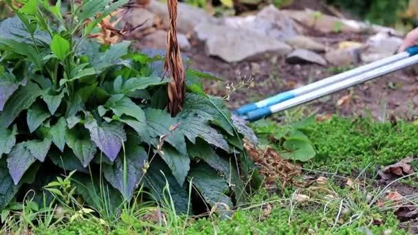 podzimní řez suchých rostlin se speciální zahradní prořezávače