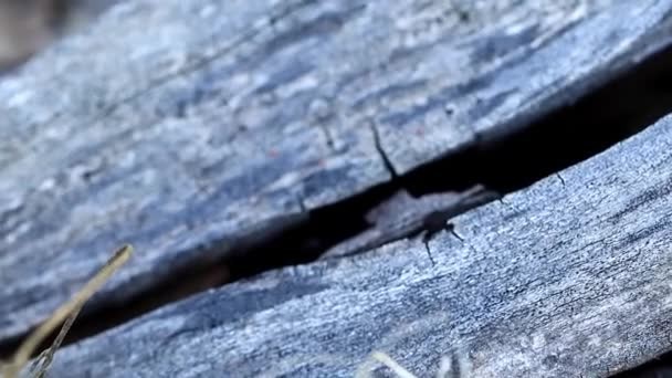 texture surface of old burnt wooden beams