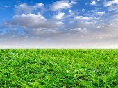 krásné zelené trávě na trávníku pod slunečnou oblohou