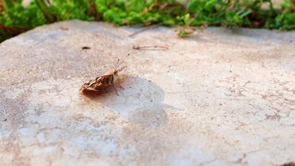 Krásný motýl sedí na betonové stezce parku
