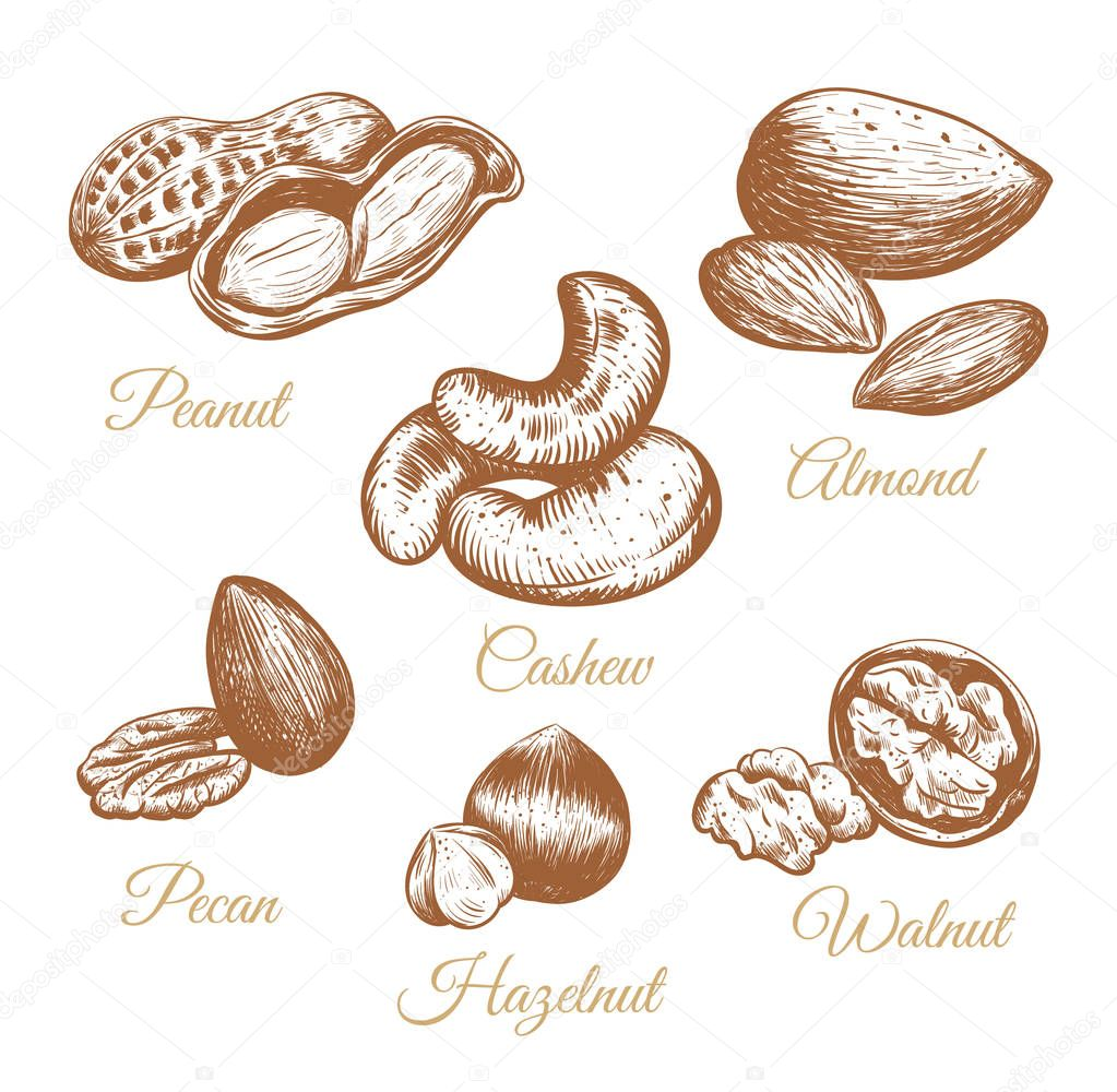 Nuts vector collection.