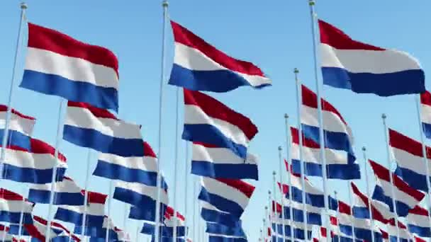 Many flags of Netherlands blowing in the wind against clear blue sky. 3d rendering animation.