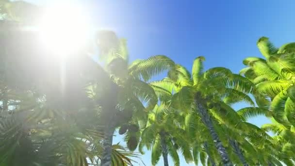 Sun in blue clear sky and palm trees. Top view of the island in the form of a bitcoin symbol - concept of prosperity and abundance. 3d rendering animation.