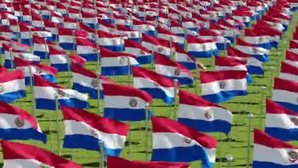 Many flags of Paraguay in green field. Three dimensional rendering 3d animation.