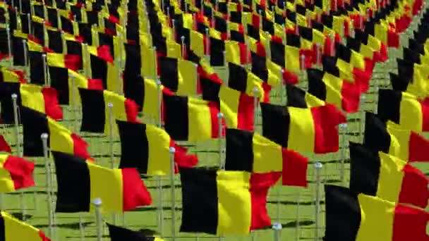 Belgium flags blowing in the wind in green field in sunny day. 3d rendering animation