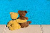 Fotografie Bären im Schwimmbad