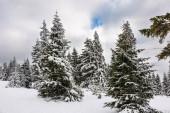 Zima se sněhem v Krkonoších, Česká republika.