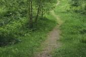 Pěší cesta v lese letní.