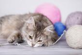 Aranyos cica játszik labdákat gyapjú. Kék és rózsaszín fonalgolyók. Szürke háttér. Szelektív puha fókusz.