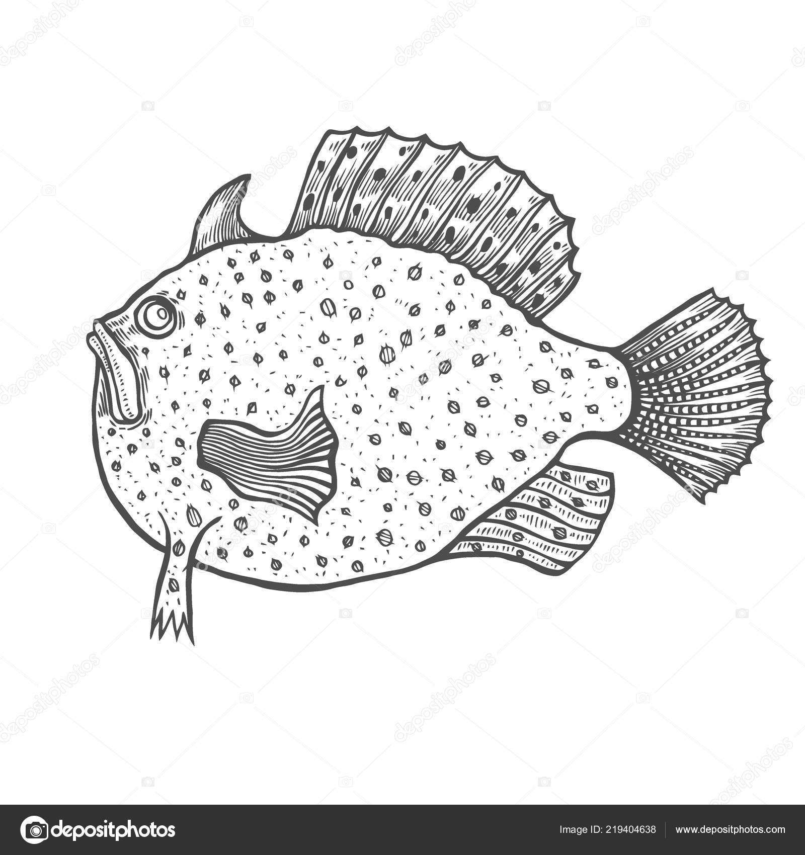 смешные рыбы гравировка стиль раскраска взрослых детей