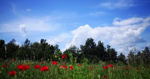 Rychle plovoucí mraky nad pole a les na den
