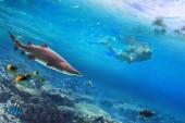 Schnorcheln im tropischen Wasser mit gefährlichem Hai