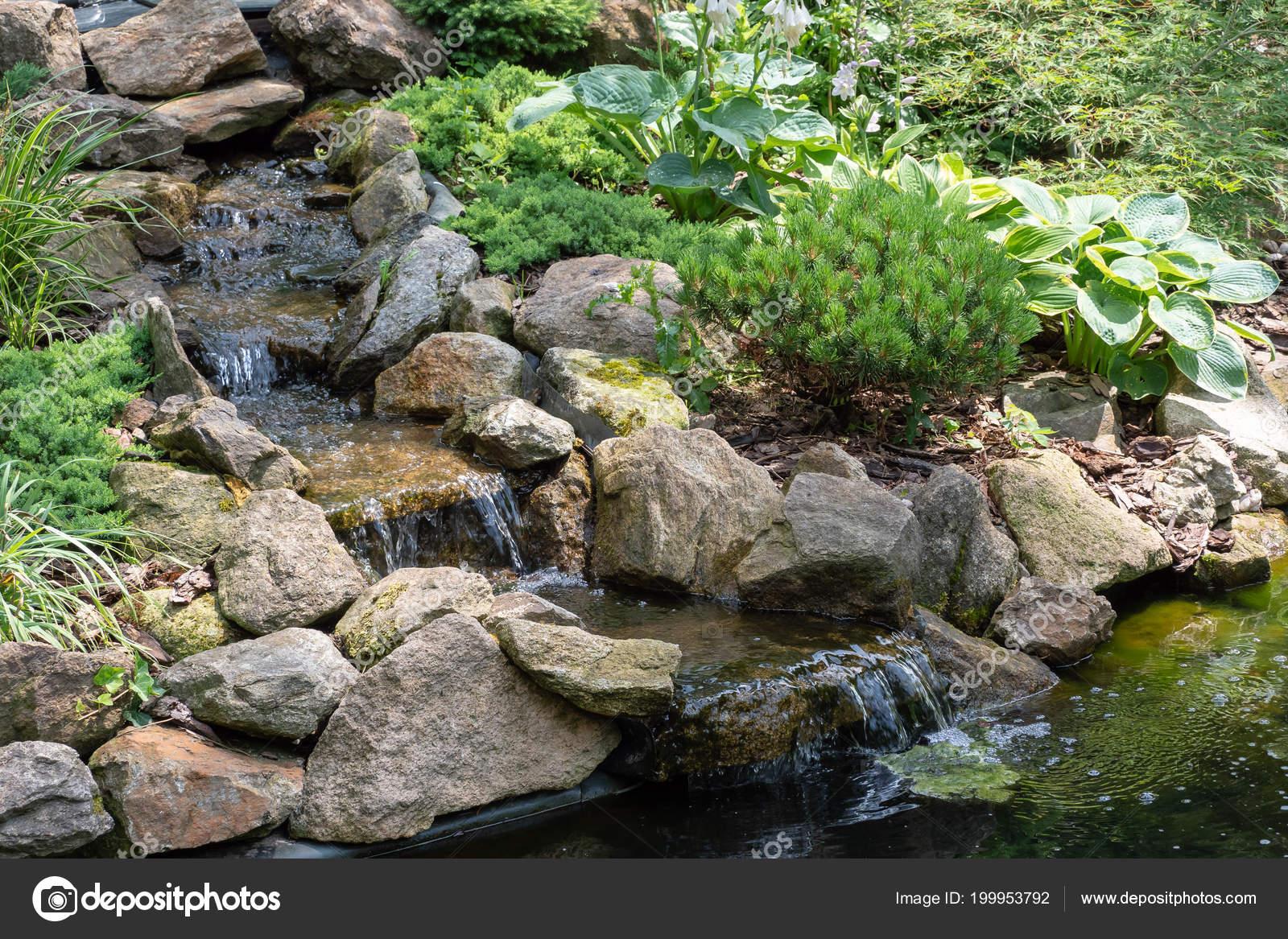 Cascade Jardin Bassin Jardin Avec Des Fleurs Eau Bel Etang