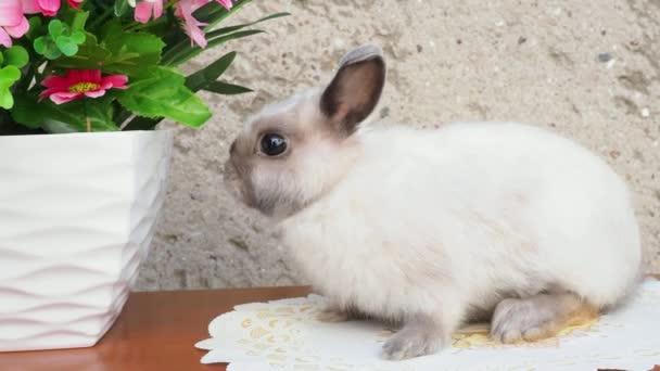 Easter bunny near spring wreath. Little dwarf rabbit sitting near flowers. 4k resolution.