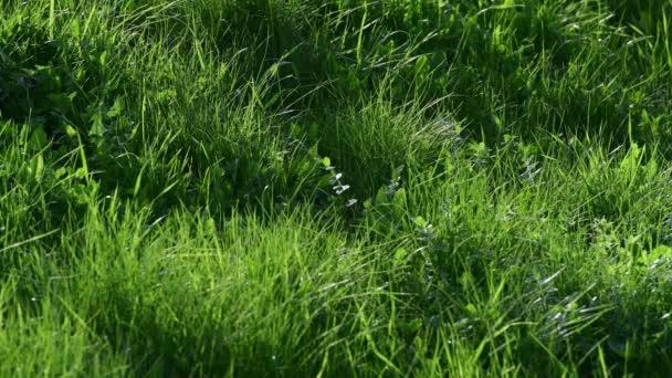 junges grünes Gras im Frühling, Fragment