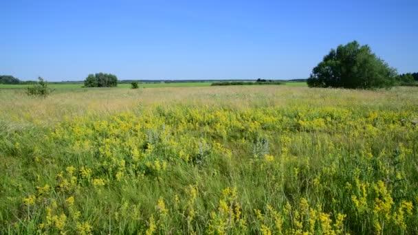 a különböző gyógynövények, Oroszország európai részén vad réten