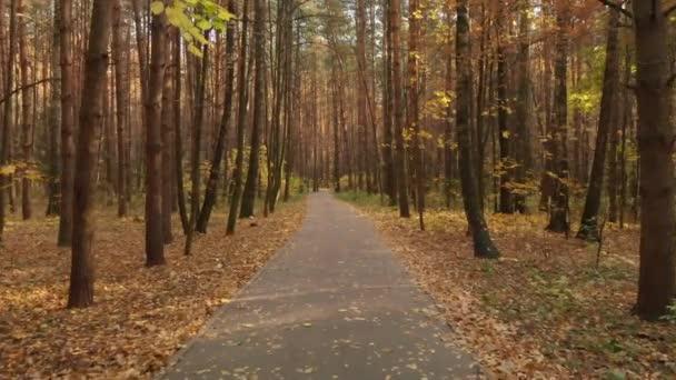 Asfaltová cesta v podzimní listnatý les