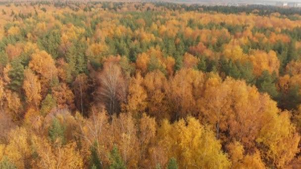 pohyb nad krásnou podzimní les