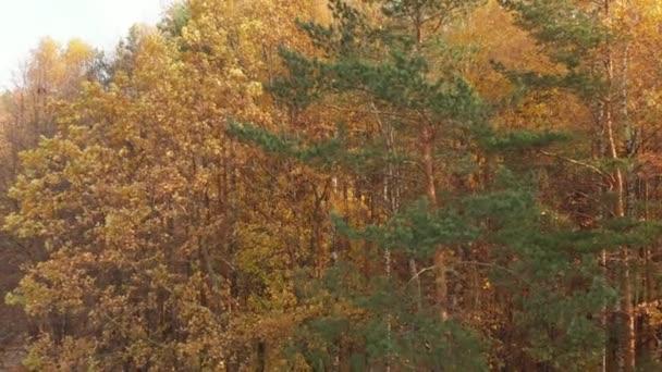 povznést nad krásnou podzimní les