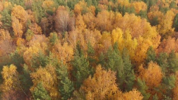 mint szép őszi erdő mozgalom