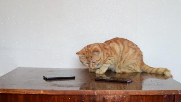 Krásná zrzavá kočka leží na stole vedle dvou mobilních telefonů