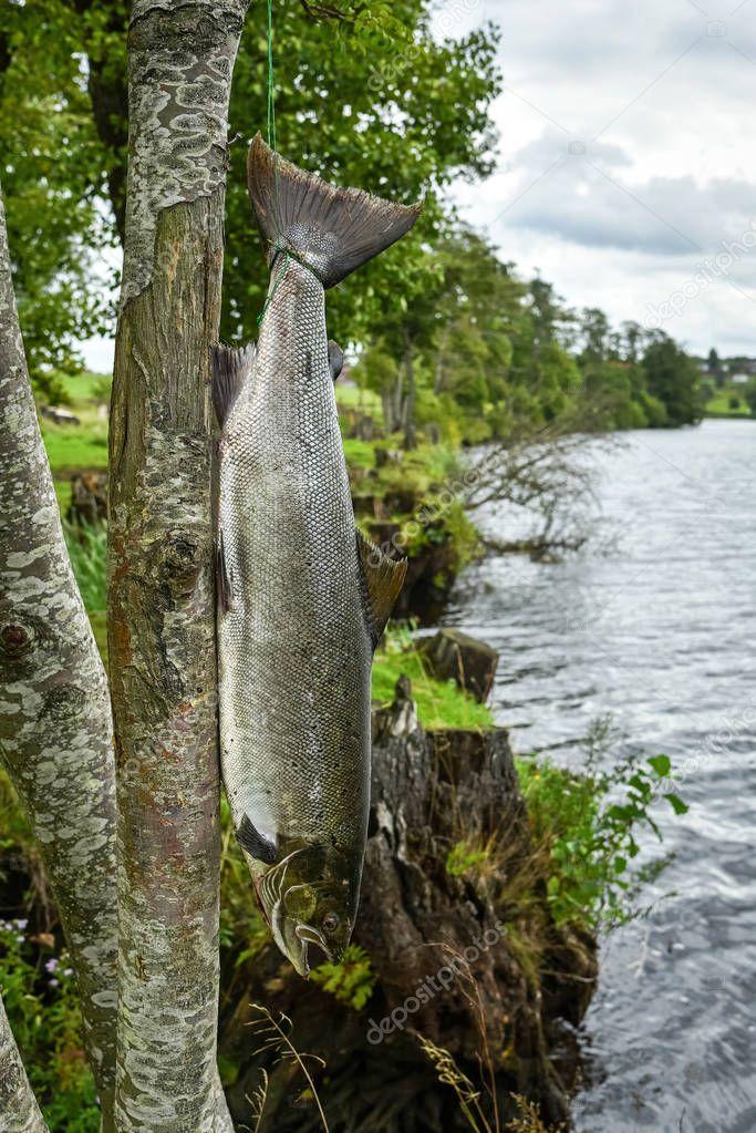 Salmon river fishing scenery
