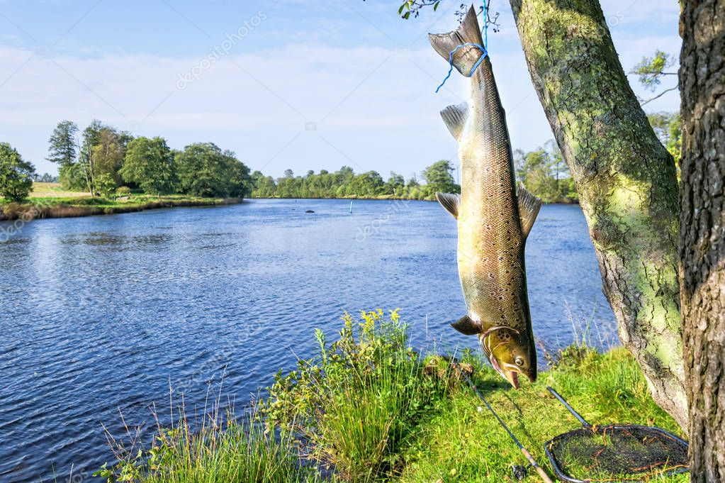 Salmon fishing scenery in Swedish river