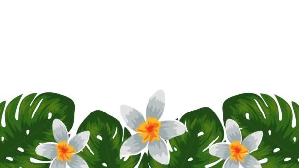 egzotikus Lombok és virágok trópusi kert
