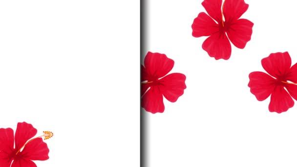 egzotikus virágok trópusi mintás animáció