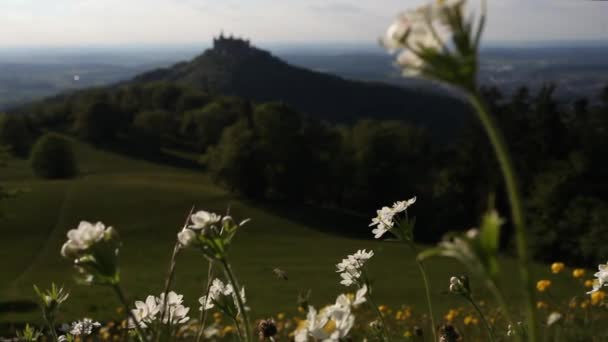 frische Frühlingsblumen in den Bergen