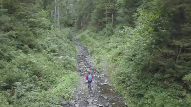 Tourist trail hiking in the forest Traveler women with backpack crossing the forest