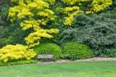 schöner grüner Garten mit Holzbank