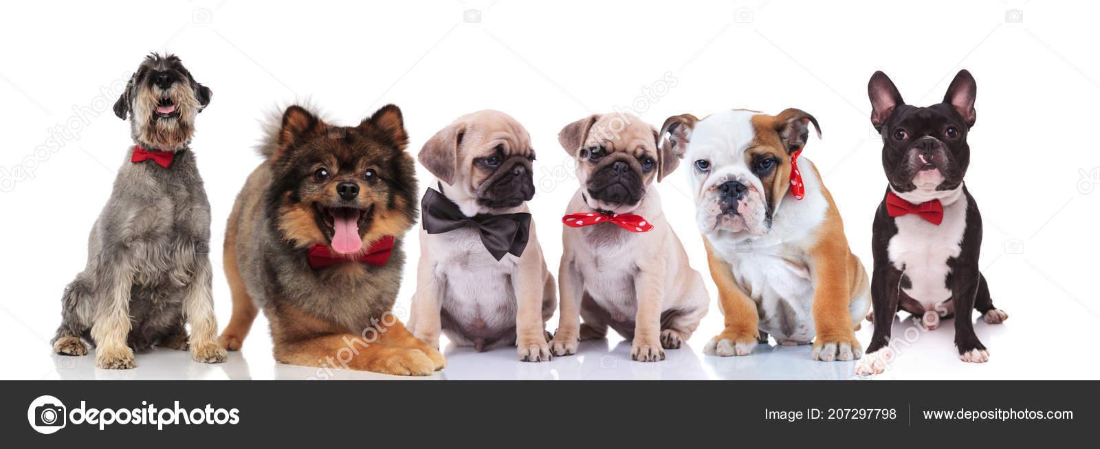 sex med hundar
