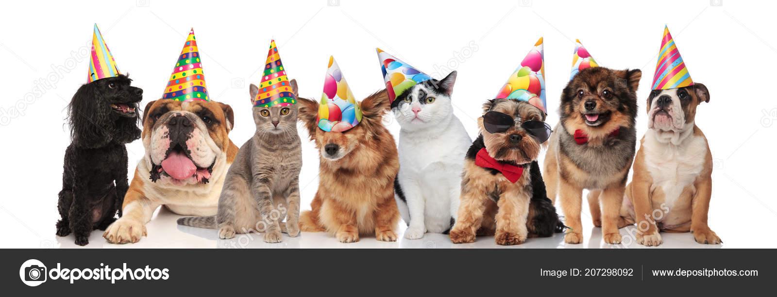 Entzückende Team Geburtstag Tiere Verschiedener Rassen Stehen Sitzen