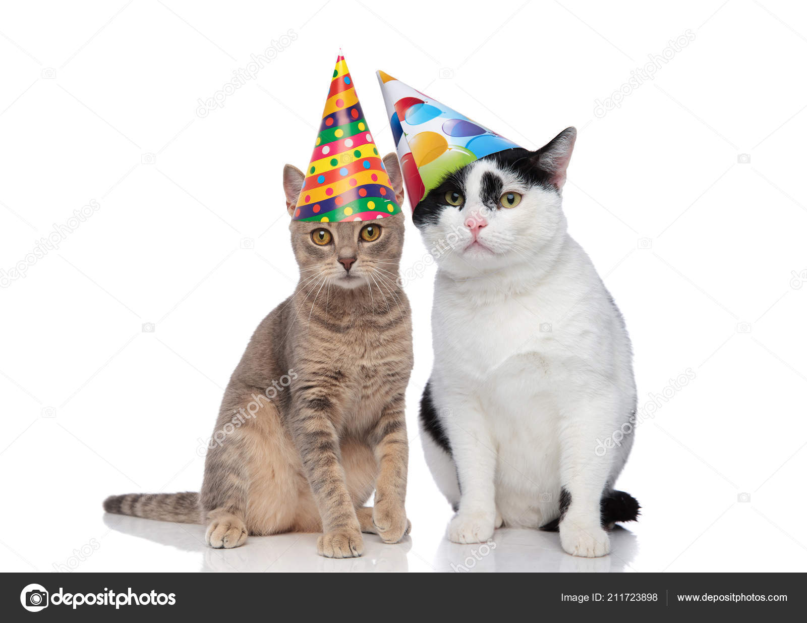 Lovely Cat Couple Wearing Colorful Birthday Hats While Sitting White Stock Photo