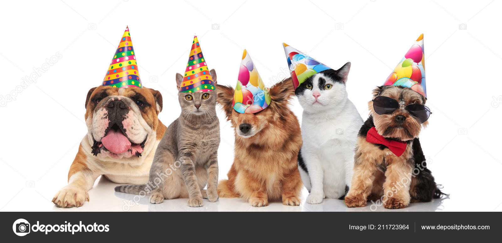 Team Five Cats Dogs Different Brees Ready Birthday Party While Stock Photo
