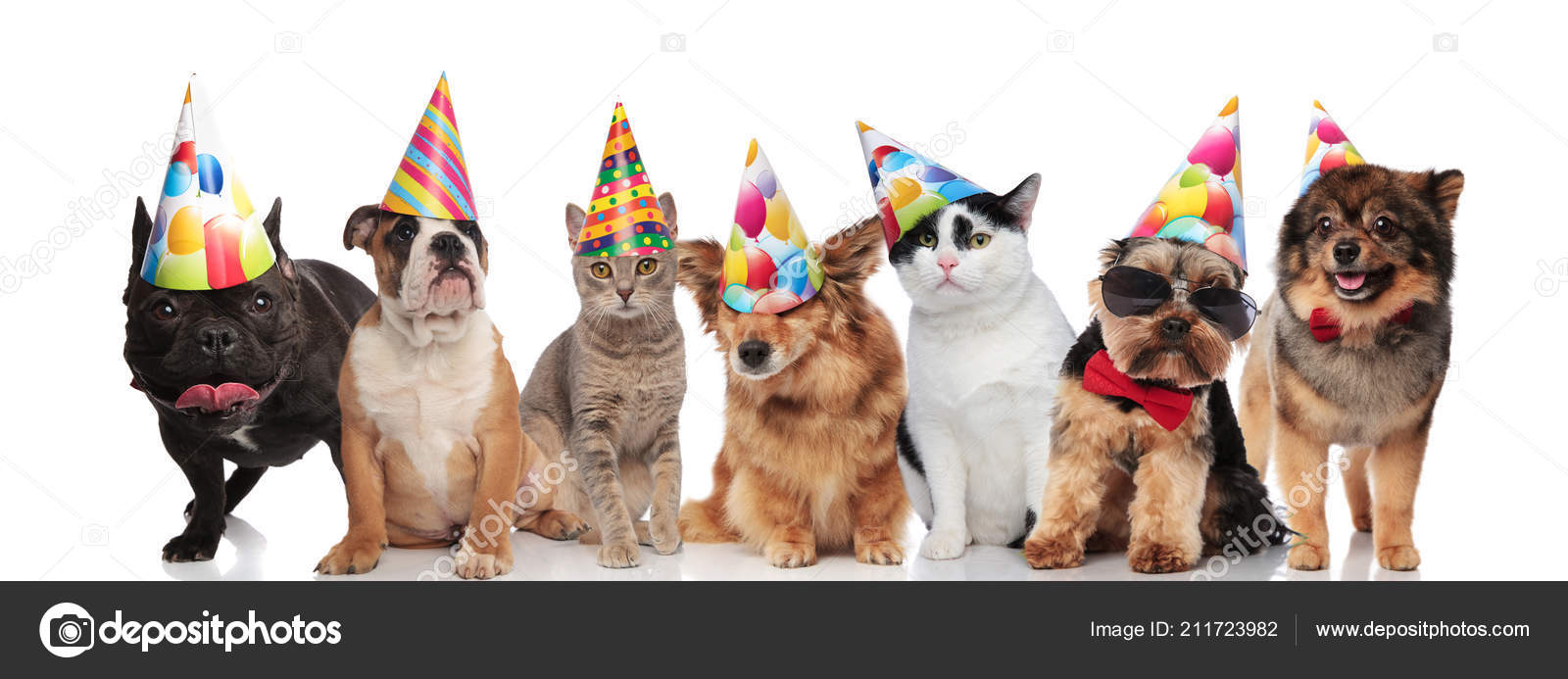Team Seven Happy Cats Dogs Wearing Colorful Birthday Hats While Stock Photo