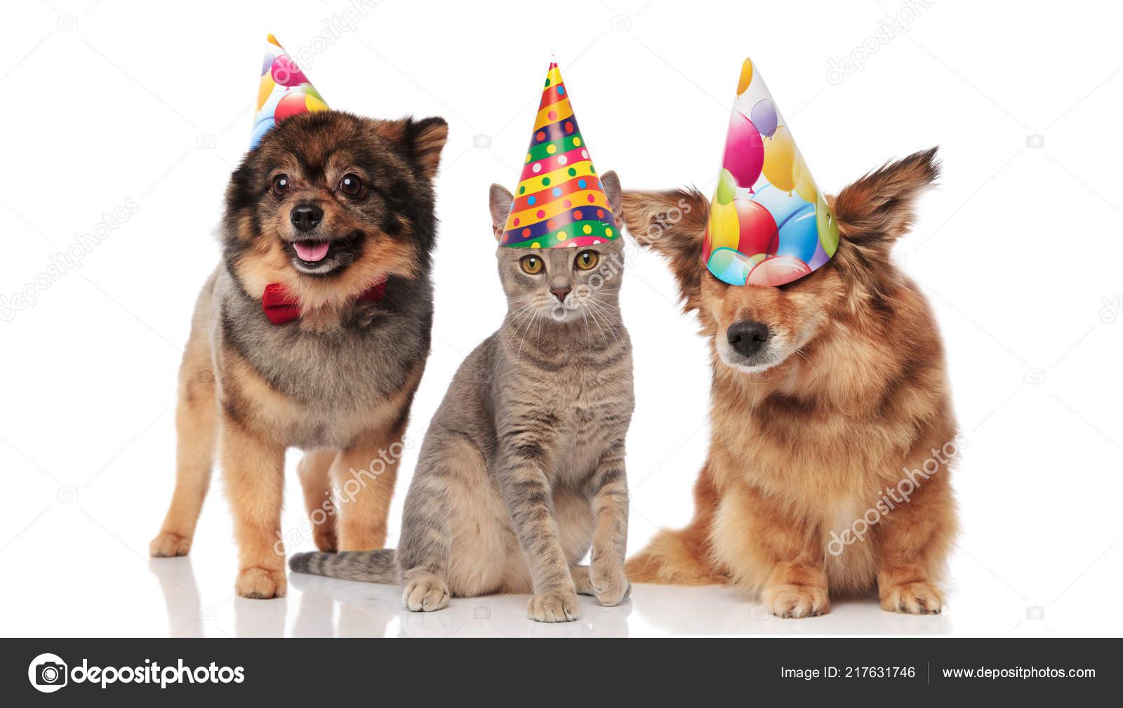 Lustige Party Hunde Und Eine Katze Tragen Geburtstag Kappen Beim