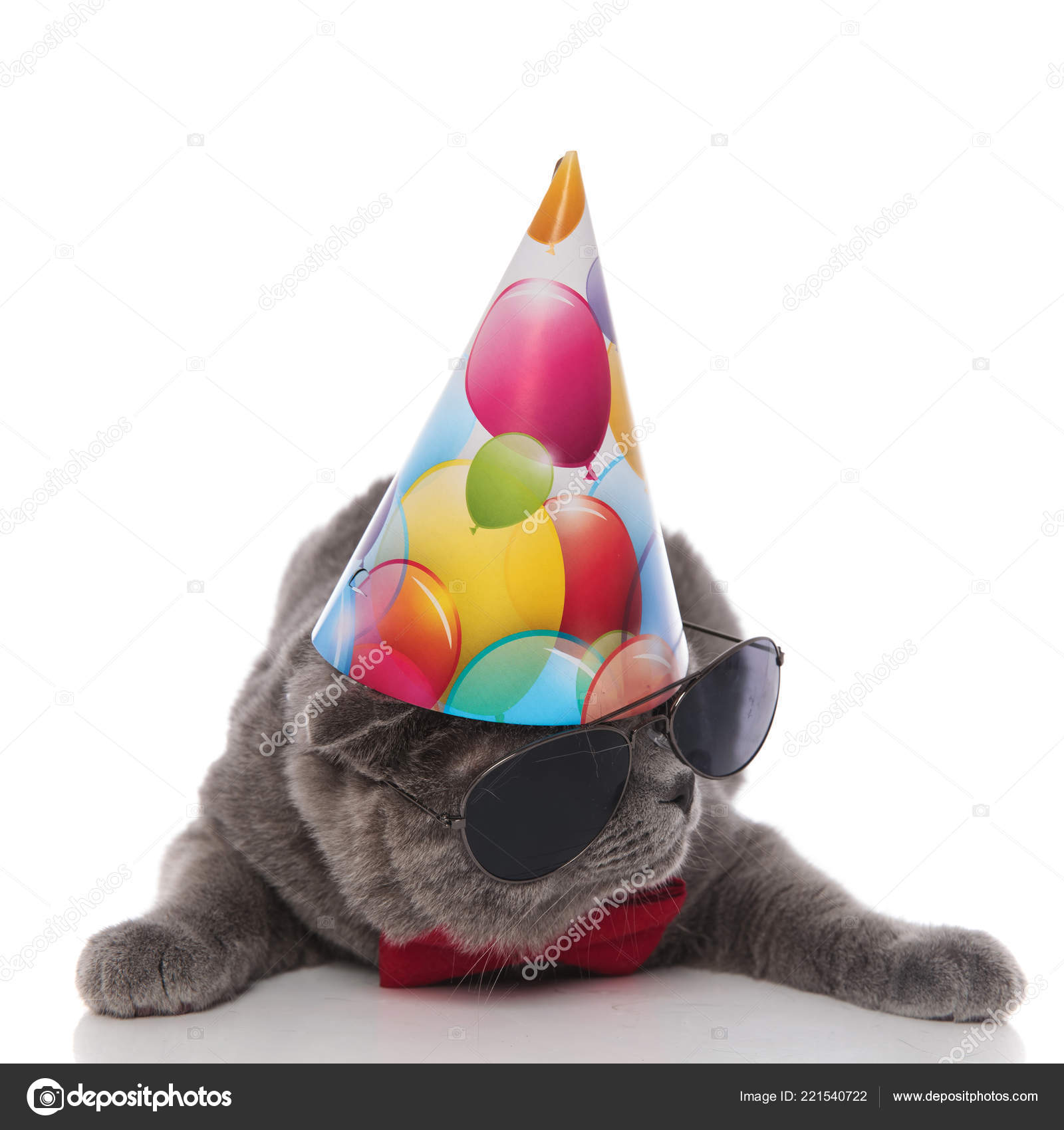 Cool Grey Gentleman Cat With Birthday Hat Looks Down To Side While Lying On White Background Photo By Feedough